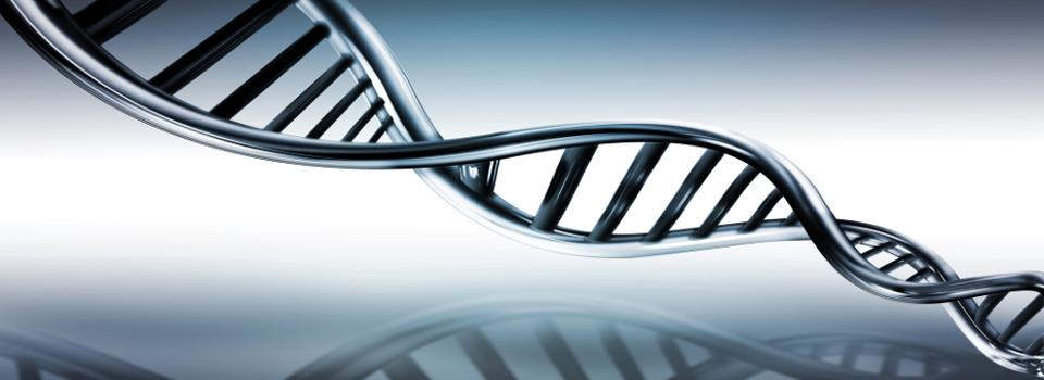 Secuenciaci n adn y diagn stico gen tico secugen for En 2003 se completo la secuenciacion del humano